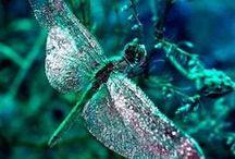 I Dream of Dragonflies