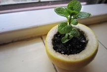 Earth Day Projects for Kids / Reusing and upcycling projects to teach kids about Mother Earth.