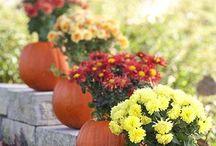 Fall Holidays / by Laura Hamilton