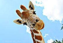 Giraffe Home Decor and more.