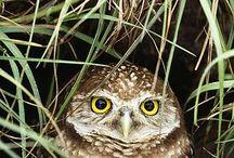 Owls / by cindi hawkins