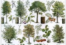 Back to Nature / Beautiful flowers, fresh plants and trees. I love nature! Do you? / by Tree Craft Diary