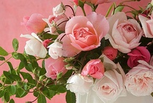 I Love Roses / Rose garden, rosebuds, bouquets, miniature roses, long stem red, fragrant pink, white, lavender and yellow blossoms.