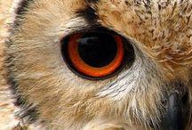 Owls / by Sheila Marie
