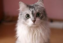Cats. / by Janie Christensen