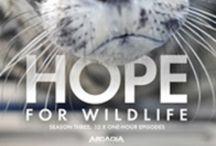 Wildlife Rehab / by Sheila Marie