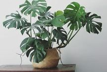 Houseplants / Plants make a space, they're the perfect finishing touch. Find some fresh inspiration with this green board!