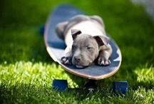 Heart warming Pets....xoxo / by Jennifer Wilson