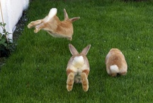 Rabbits / by Jennifer Mezzich