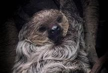 Sloths / by Ashley Arimborgo