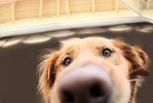Cães - Dogs / Sobre cães