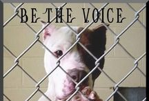 Disgusting, Comfortless, Unpromising World!   / What we need but nobody will fix.To hell with discrimination! Stop stereotypes! Report dog fighting, cruelty, neglect and abuse! Spay and neuter pets! Stand up for what's right!!! / by Jennifer Wilson