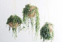 Indoor Greenery / by Erin Macdonald