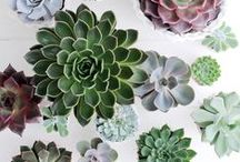 Plants at Home / Ideas to compose plants and everything plants need: beautiful pots & surroundings in contemporary, cozy interiors