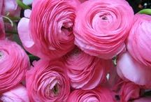 fleur / by Boutique de Bella