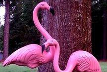 Flamingo Nation / by Norma Weekman