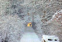 Whim: Winter Wonderland / by Meg Raymond