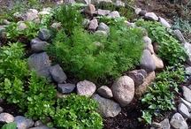 In my Garden / by Christine Pickering
