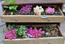 Hometalk Gardening Inspiration / Sweet Succulents!