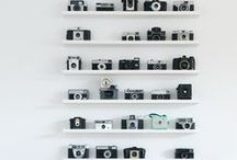 Whim: Collections and Curiosities / by Meg Raymond