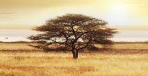 SAFARI / Safari, african wildlife, savanna, national parks and game reserves.