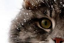 CUTIE KITTENS / All about cute cats, kitten... Because they are so adorable!  http://salwapetersen.com