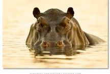 Critters / More Critter Boards: Elephants*FeatheredFriends  / by Tina