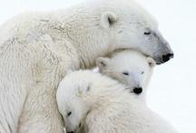 Critterz: Polar / by Lori Ann
