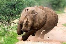 Rhino / by Michi ek