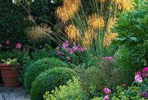 Garden ideas / Planning my garden