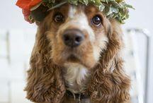 Dog / Receitinhas e alimento para dogs ❤️