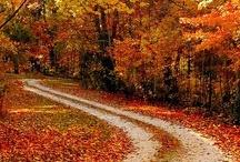 Fall / Fall is my favorite season / by PJ Jones-Geary