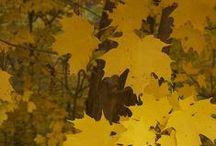 Mellow Yellow / by Deb K