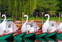 Swans / by Deb K