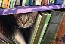Kittens & Books!