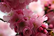 Spring Forward / by Linda Shelnutt Stone