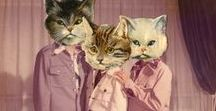 Rupert / In 2013 I turned into a cat lady. This board is dedicated to my spoiled cat Rupert