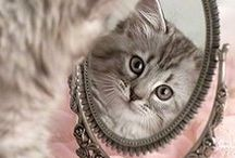 CATS / All things cat! Including adorably cute kitties, cats and kitten.