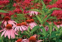 Flowers & Garden / by Leslee Shepler