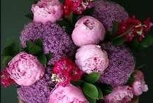 Floral Arrangements / Beautiful bouquets and floral arrangements that just make me happy to look at.