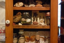 Museum Pests Project