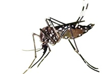 Dengue Virus Project