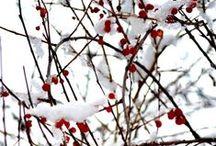 Seasons - Winter / Winter-inspiration