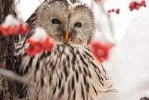 So cute! / by McKinley Herrington