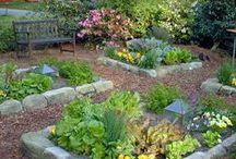 Dream Home - Garden