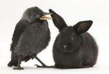 Artspiration: Birds