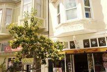 San Francisco Trees Project