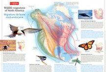 Animal Movement Maps