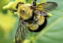 You knew there would be one on BEES!
