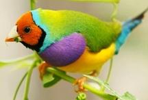 BEAUTIFUL BIRDS / by Ellie Maziekien
